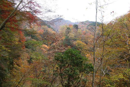 錦秋のユーシン渓谷