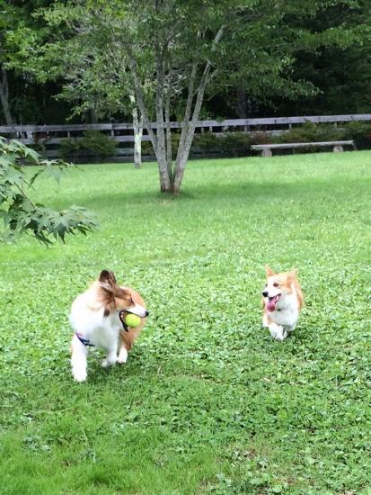 cherie&niko160901