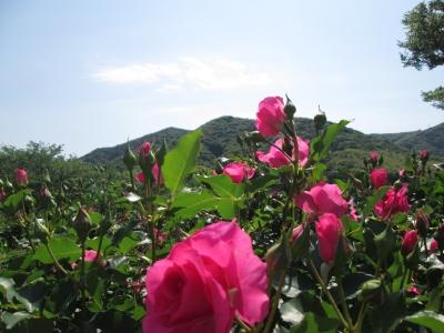IMG_6865錦江湾公園
