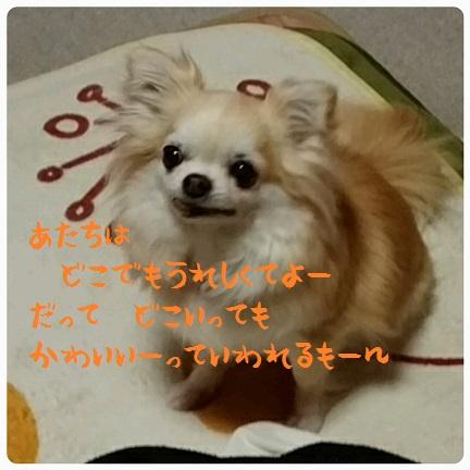 20160414_150155.jpg