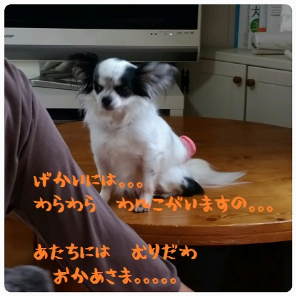 20160528_154451.jpg