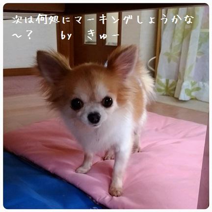 20160823_123441.jpg