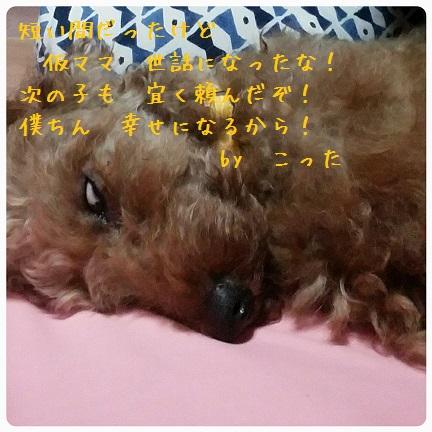 20160824_201440.jpg