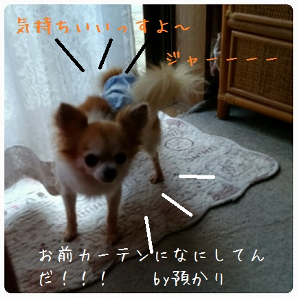20160901_065910.jpg