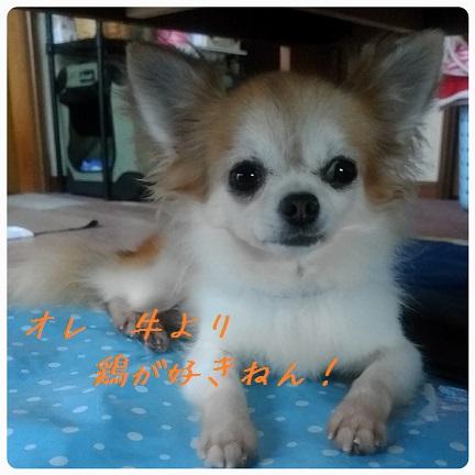 20160909_075230.jpg