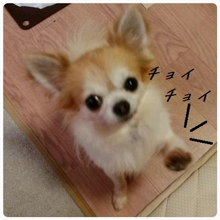 20160910_194829.jpg