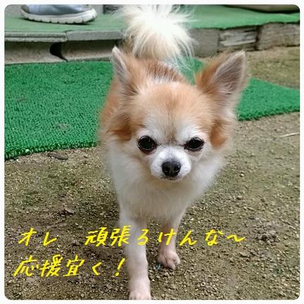 20160915_122155.jpg