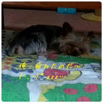 20160923_091022.jpg