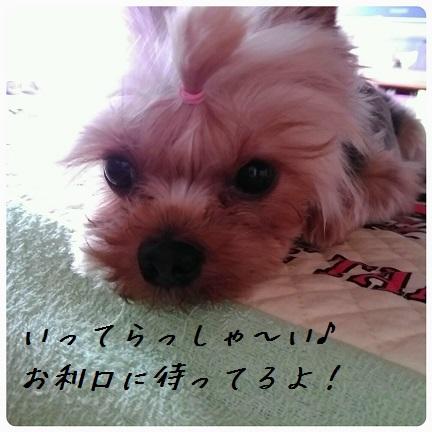 20160927_140924.jpg