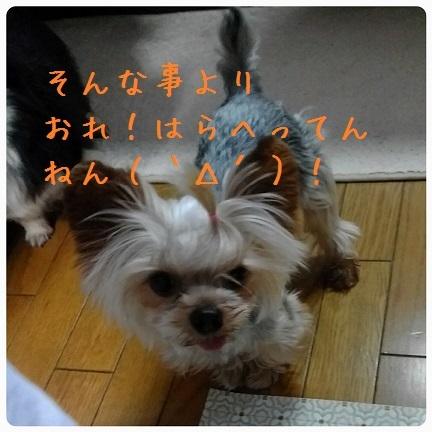 20161117_072751.jpg