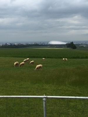 札幌ドームと羊
