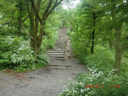 002 樹林帯