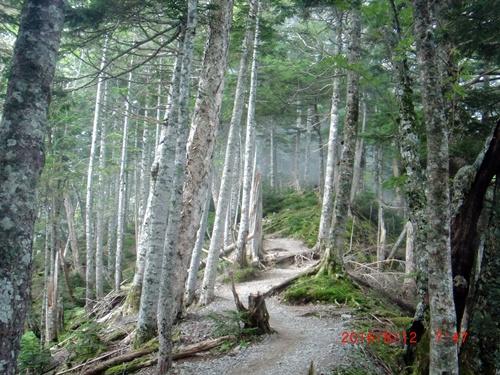 040 樹林帯