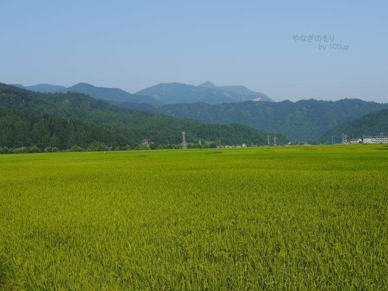 2016年8月8日撮影 新潟県