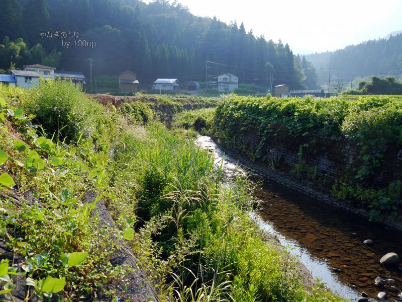 2016年8月13日撮影 新潟県お散歩