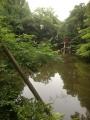 氷川神社池