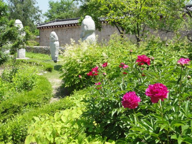 2016年5月14日 国立民俗博物館近く 芍薬