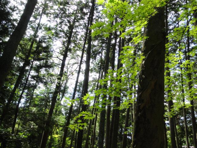 2016年7月5日 唐招提寺 森林浴