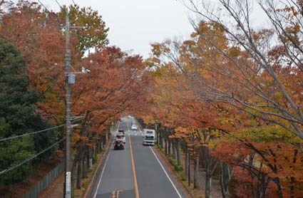 ケヤキ通り01
