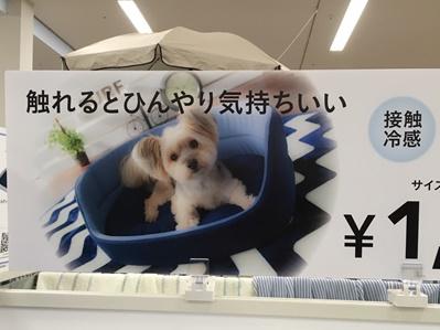 201604ヨーキー大活躍-crop