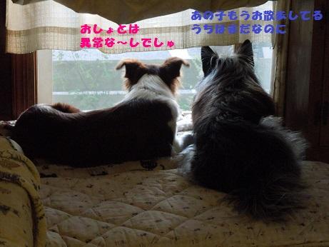 DSCN6905-1.jpg