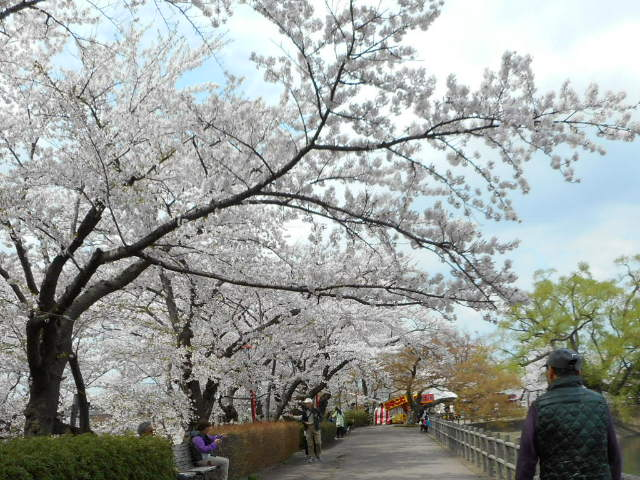 高松の池のお花見