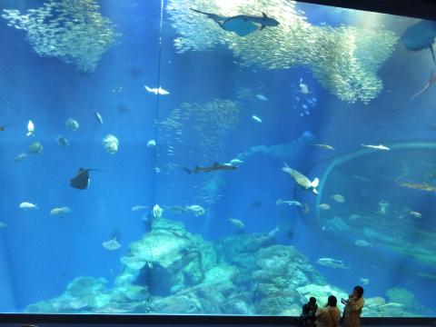 出会いの海の大水槽