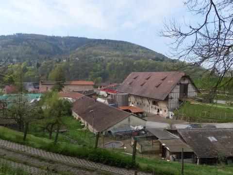 Neuburg修道院1