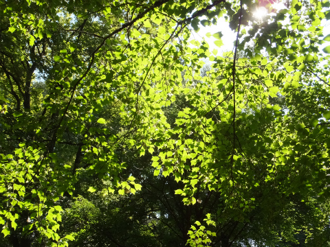 木漏れ日集め7