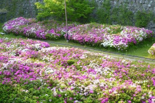 ツツジ お城 2016 4月(mt.okuho)