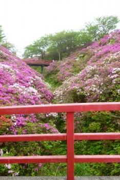 淡輪つつじ祭り 2016 4月(mt.okuho)