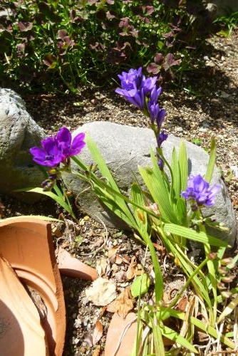 みっちゃんの庭  2016 4月(mt.okuho)