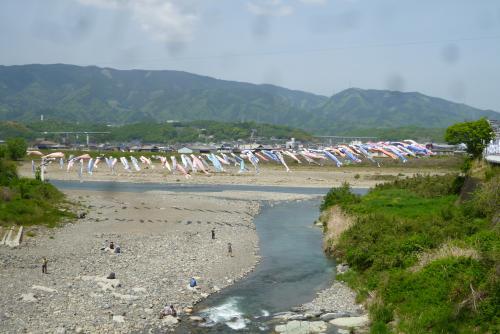 丹生川の鯉のぼり  2016 4月(mt.okuho)