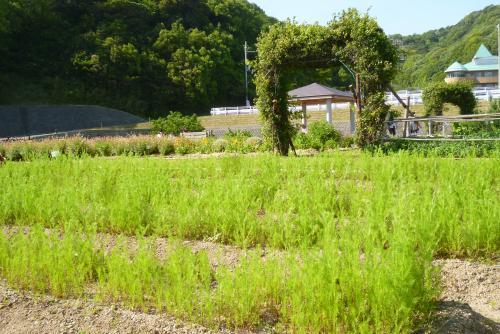 西庄ふれあいの郷 2016 5 4 (mt.okuho)