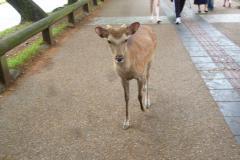奈良 2016 5 10 (mt.okuho)