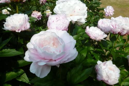 京都府立植物園 2016 5 15 (mt.okuho)