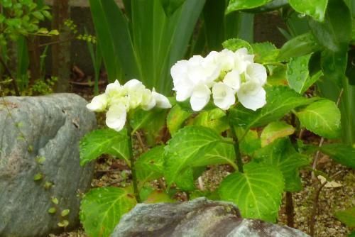 みっちゃんの庭 2016 5 30 (mt.okuho)