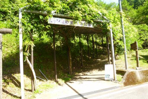 みやまの里 2016 6 3 (mt.okuho)