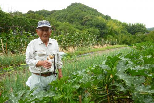 秋津野ガルテン 野菜畑 2016 6 12 (mt.okuho)