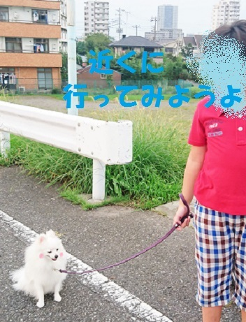 DSC_0062_201609281506147d1.jpg