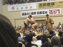 sumo20168.jpg