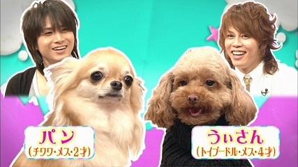 20110720 新堂本兄弟 JUJU パンちゃん 014 50