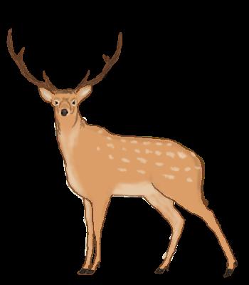 illust-animal15.png