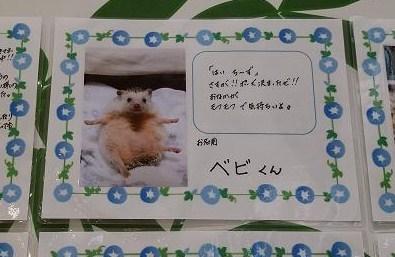 20160529_182904.jpg
