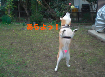 IMG1497-2.png