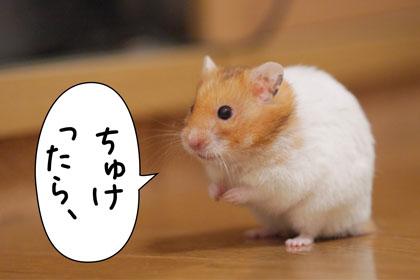 yoji1.jpg
