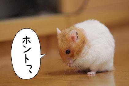 yoji2.jpg
