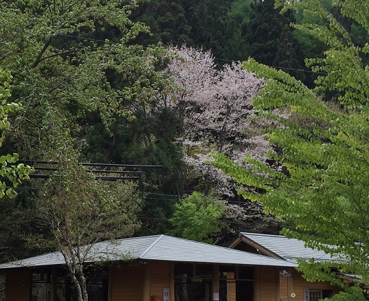 kagura_tu12.jpg