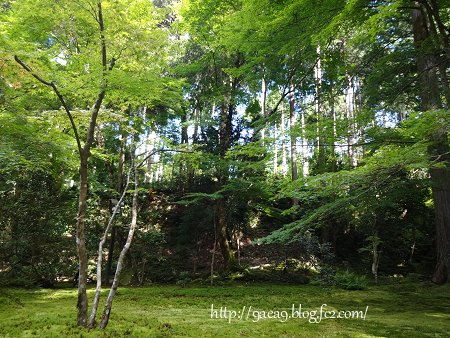 2016 8-20 京都大原~三千院へ 6