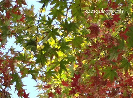 カラフル 紅葉